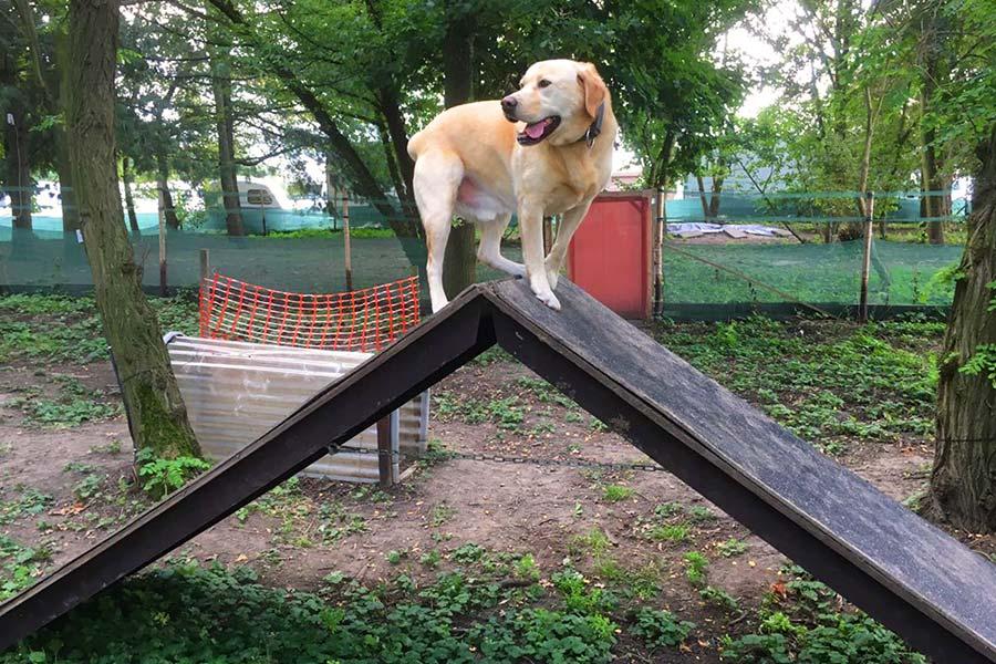 A-Wand-Hundespielplatz-Koeln