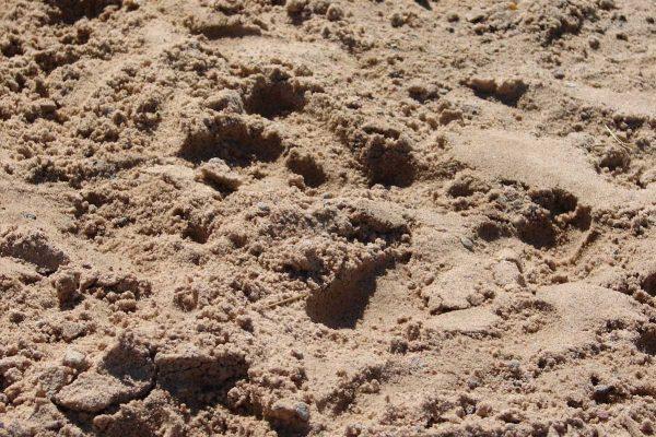 Sand Hundespielplatz Köln
