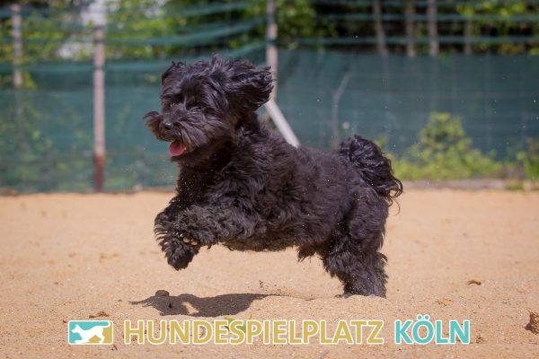 Hundespielplatz-Koeln.de-IMG_2965-Web