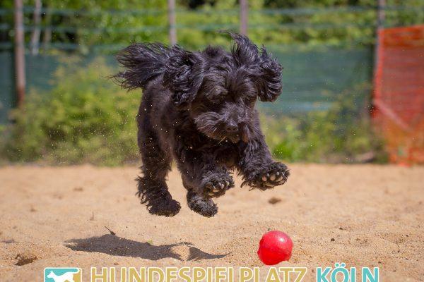 Hundespielplatz-Koeln.de-IMG_2970-Web