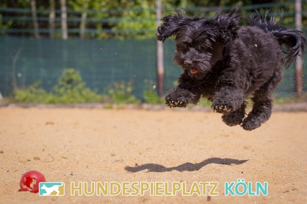 Hundespielplatz-Koeln.de-IMG_2979-Web