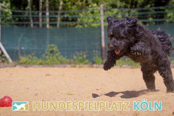 Hundespielplatz-Koeln.de-IMG_2986-Web