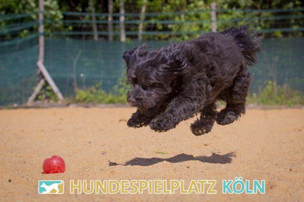 Hundespielplatz-Koeln.de-IMG_2987-Web
