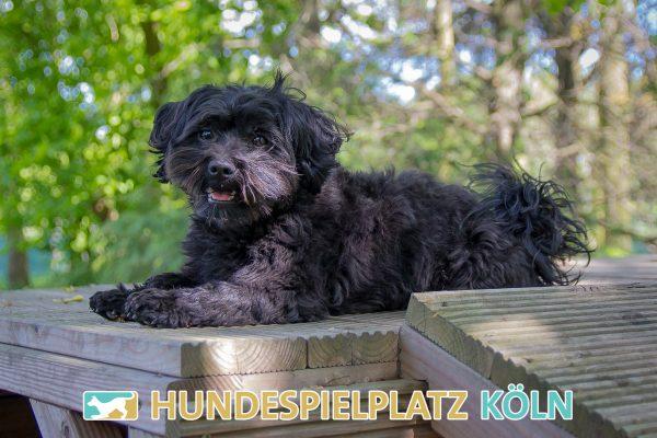Hundespielplatz-Koeln.de-IMG_3020-Web