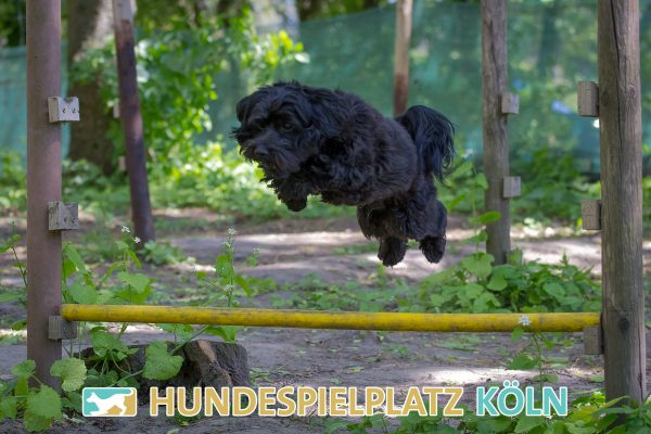 Hundespielplatz-Koeln.de-IMG_3040-Web