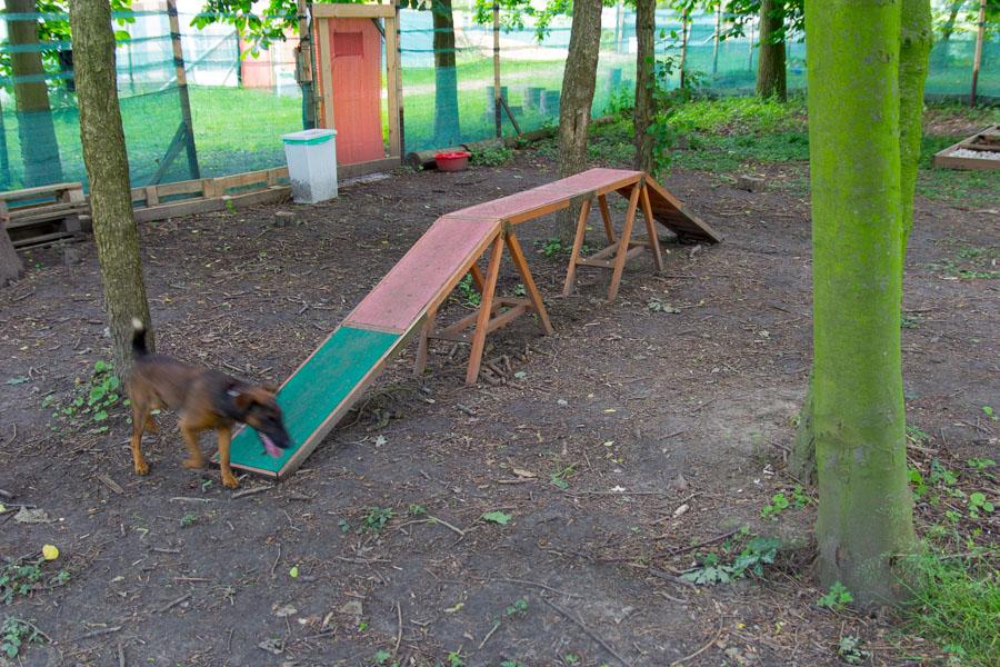 Hundespielplatz Köln Kleiner Steg
