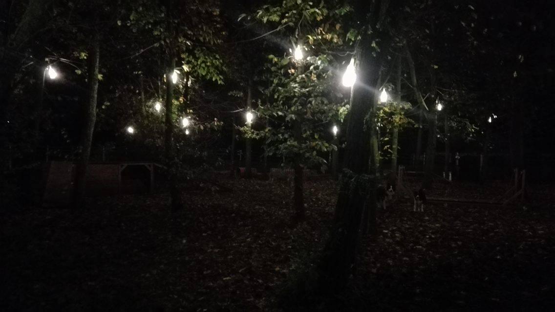 licht wald-parcours hundespielplatz