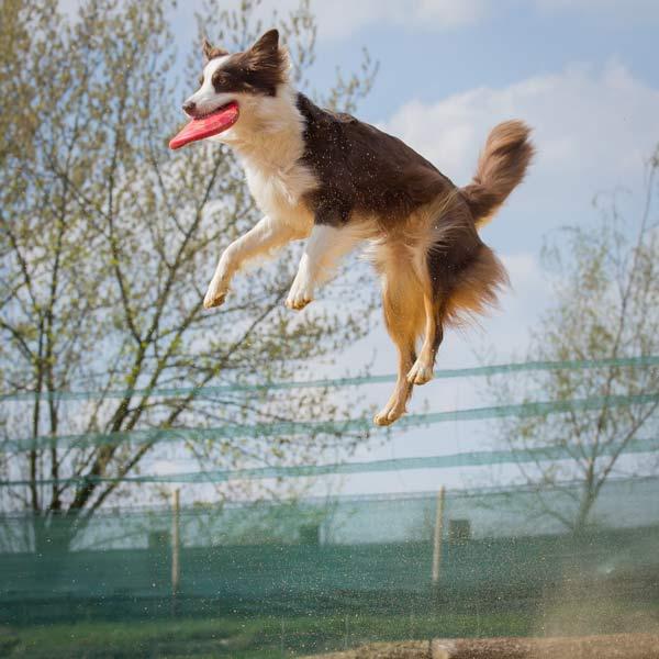 Frühlingsfest Hundespielplatz Frisbee