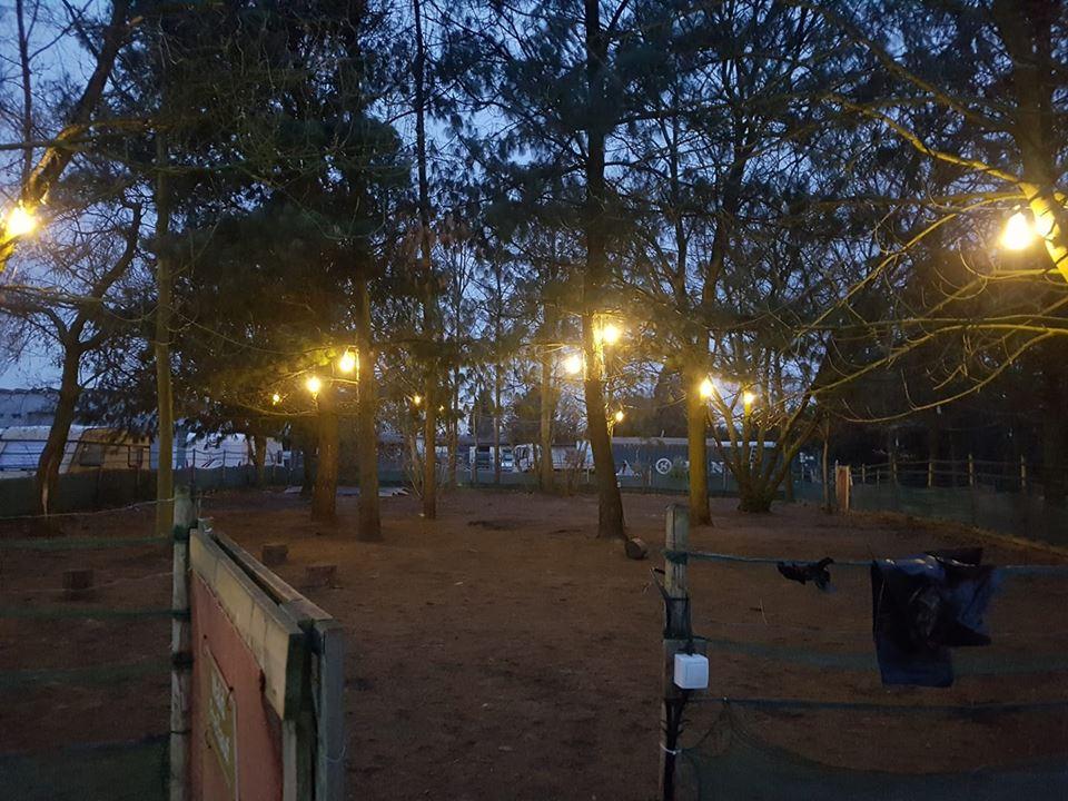 Licht Wald-Freilauf Hundespielplatz Koeln
